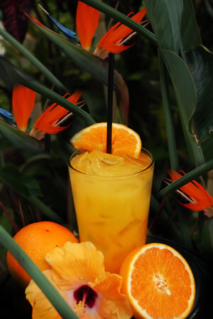 Taste 5 of our most popular cocktails and enjoy light appetizers for a great cuase. 100% of the net proceeds will go towards benefiting the people of the Bahamas.